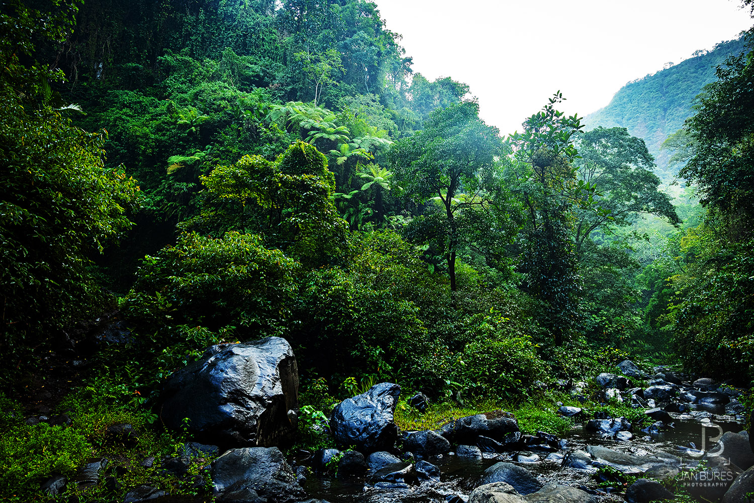Forest, Nort of Bali, Indonesia
